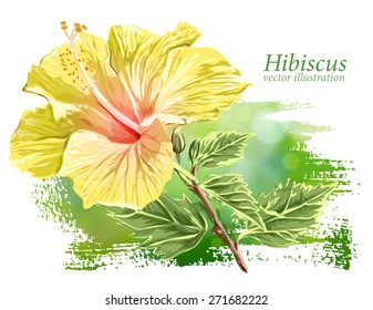 Yellow Flower Hibiscus on green background - vector illustration / Eps10
