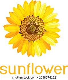Yellow flower of sunflower with title on white background