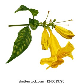 Yellow flower vector illustration