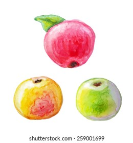 Yellow, green apple and red apple with leaf. Isolated