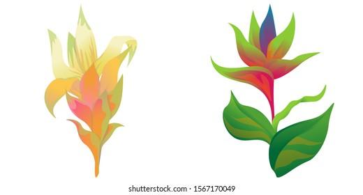 Yellow Guzmania. Green bird of paradise. Vector illustration. Isolated illustration element. Floral botanical flower. Wild leaf wildflower isolated. Exotic tropical hawaiian jungle.
