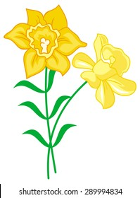 Yellow lilies isolated on a white background