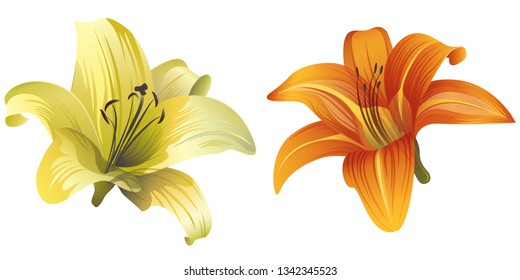 Yellow Lilium. Orange Daylily. Vector illustration. Floral botanical flower. Wild leaf wildflower isolated. Exotic tropical hawaiian jungle. Isolated illustration element.