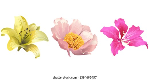 Yellow Lilium. Pink peony. Pink Bauhinia Purpurea. Vector illustration. Floral botanical flower. Wild leaf wildflower isolated. Exotic tropical hawaiian jungle. Isolated illustration element.