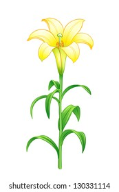 Yellow lily. EPS10 vector illustration