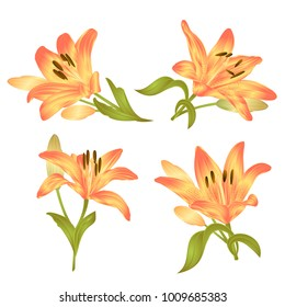 Yellow Lily  Lilium candidum,flower with leaves and bud on a white background set first vector illustration editable hand drawn