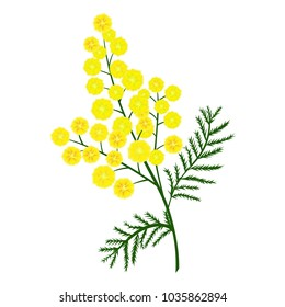 Yellow mimosa flower branch. Vector nature illustration.