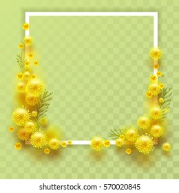 Yellow mimosa on transparent background. Template frame for greeting card on March 8 International Womens Day. Illustration in vector format
