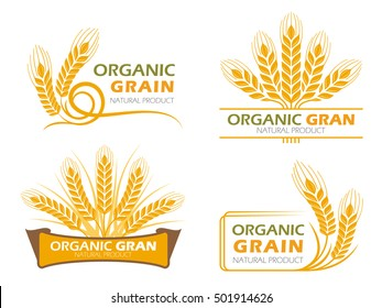 Yellow paddy barley rice organic grain products and healthy food banner sign vector set design
