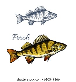 Yellow perch or bass fish sketch. Freshwater perch predatory fish isolated icon for fishing sport symbol, fish market label of seafood restaurant design.