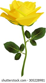 yellow rose on a white background vector