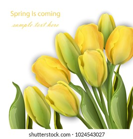 Yellow Tulip flowers on white background Vector realistic illustrations