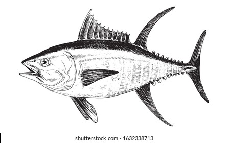 Yellowfin tuna, fish collection. Healthy lifestyle, delicious food. Hand-drawn images, black and white graphics.