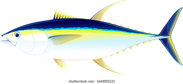 Yellowfin tuna fish in side view, realistic sea fish illustration on white background, commercial and recreational fisheries