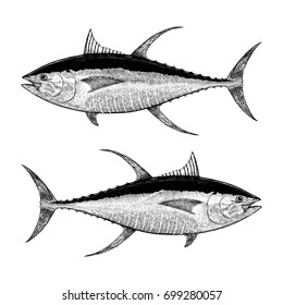 Yellowfin Tuna Illustration
