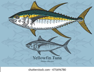 Yellowfin Tuna. Vector illustration with refined details and optimized stroke that allows the image to be used in small sizes (in packaging design, decoration, educational graphics, etc.)