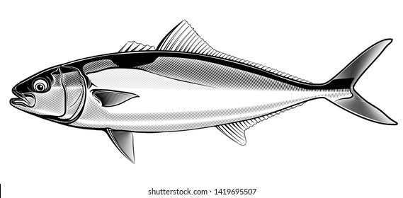 Yellowtail Fish Images, Stock Photos & Vectors | Shutterstock