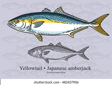 Yellowtail Tuna Images Stock Photos Vectors Shutterstock