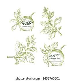 Yerba mate. National traditional beverage. Natural herbal tea with metal straw from calabash gourd. Set of symbols, vintage sign. Botanical plant, branch, leaf, flower. Vector hand drawn illustration