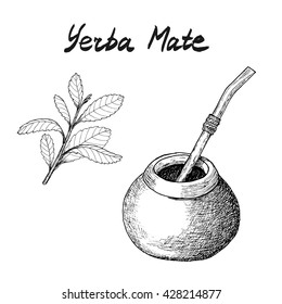 Yerba mate tea branch and calabash hand drawn