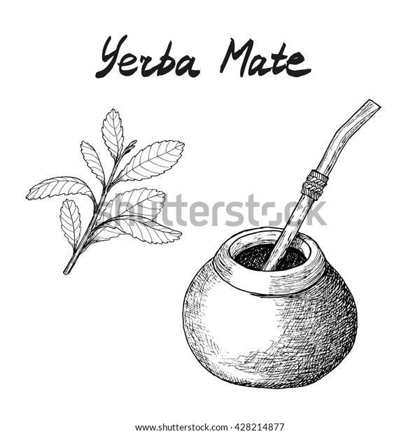 Vector De Stock Libre De Regalías Sobre Rama De Yerba Mate