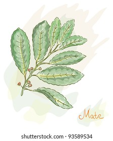 Yerba Mate. Watercolor style. Vector illustration.