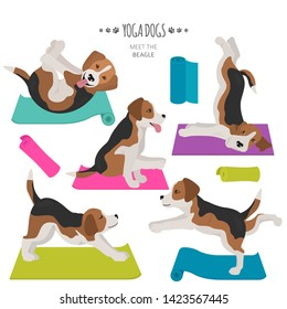 Yoga dogs poses and exercises. Beagle clipart. Vector illustration