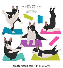 Yoga dogs poses and exercises. Boston terrier clipart. Vector illustration