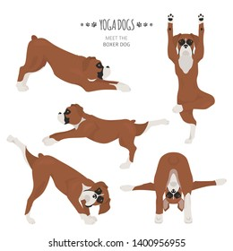 Yoga dogs poses and exercises. Boxer dog clipart. Vector illustration