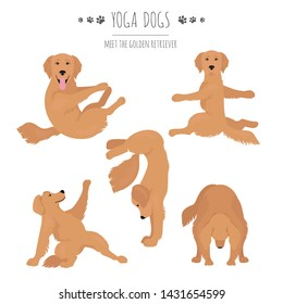 Yoga dogs poses and exercises. Golden retriever clipart. Vector illustration