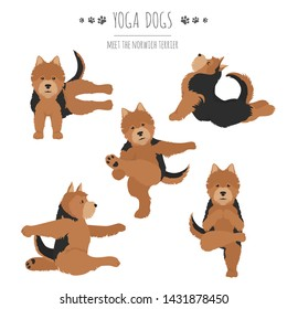 Yoga dogs poses and exercises. Norwich terrier clipart. Vector illustration