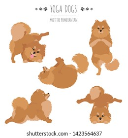 Yoga dogs poses and exercises. Pomeranian clipart. Vector illustration