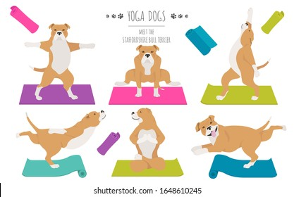 Yoga dogs poses and exercises poster design. Staffordshire bull terrier clipart. Vector illustration
