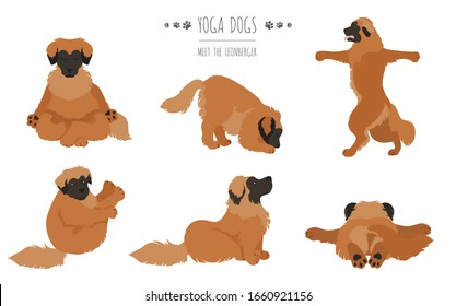 Yoga dogs poses and exercises poster design. Leonberger clipart. Vector illustration