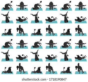 Yoga dogs poses and exercises poster design. Portuguese water dog  pattern. Vector illustration