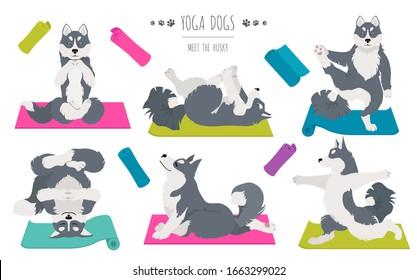 Yoga dogs poses and exercises. Siberian husky and Alaskan husky clipart. Vector illustration