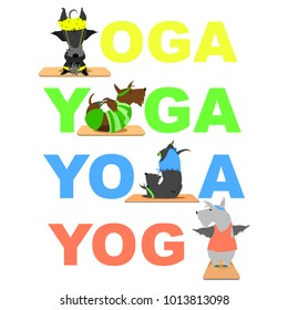 Yoga poster background scottish terrier dog doing yoga Yoga poses