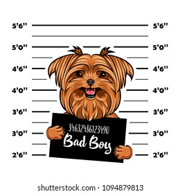 Yorkshire terrier Bad boy. Dog prison. Police mugshot background. Yorkshire terrier criminal. Arrest photo. Vector illustration.