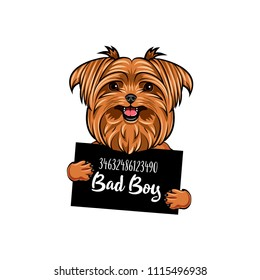 Yorkshire terrier Bad boy. Dog prison. Yorkshire terrier criminal. Arrest photo. Vector illustration.