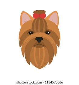 Yorkshire terrier breed dog muzzle color vector icon