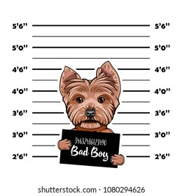 Yorkshire terrier Criminal. Police banner. Arrest photo. Police placard, Police mugshot, lineup. Police department banner. Dog offender. Vector illustration