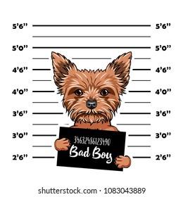 Yorkshire Terrier dog Bad boy. Dog prison. Police mugshot background. Yorkshire terrier criminal. Arrested dog. Vector illustration.