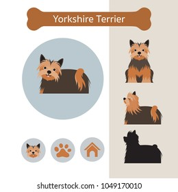 Yorkshire Terrier Dog Breed Infographic, Illustration, Front and Side View, Icon