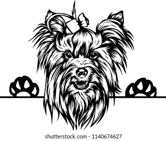Yorkshire Terrier dog breed pet