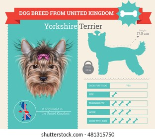 Yorkshire Terrier dog breed vector info graphics. This dog breed from United Kingdom