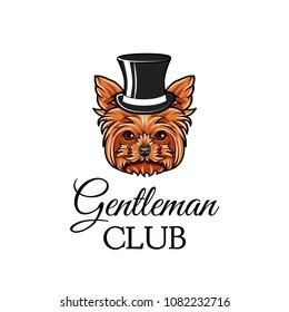 Yorkshire terrier dog gentleman. Top hat. Gentleman club text. Yorkshire terrier breed. Dog portrait. Vector illustration.