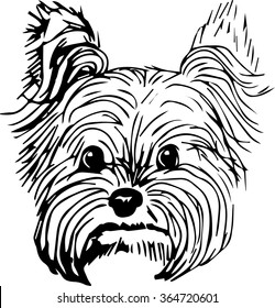 Yorkshire terrier dog hand drawn sketch. Purebred small dog face on white background.
