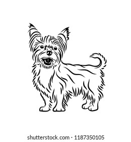 Yorkshire terrier dog - isolated vector illustration