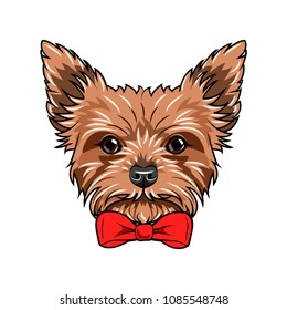 Yorkshire Terrier dog. Red bow. Dogs accessory. Yorkshire terrier dog breed. Vector illustration.