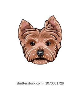 Yorkshire terrier face. Dog head. yorkshire terrier portrait. Dog breed. Vector illustration